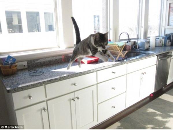 Lidojošie kaķi - Page 5 84568881