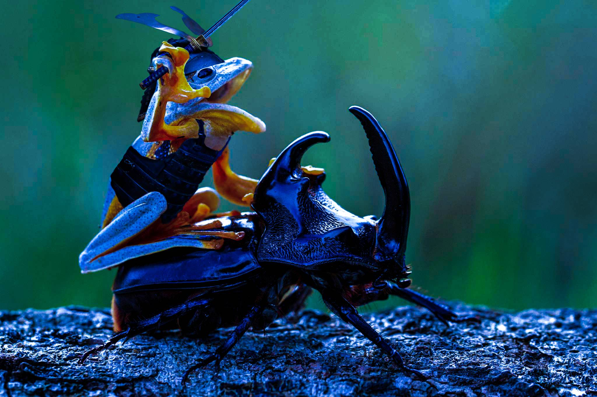 epic photoshop battle   frog riding  beetle wow gallery ebaums world