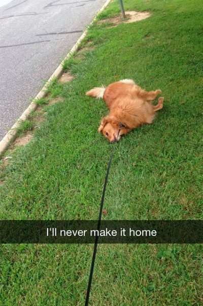 2 - 28 Hilarious Dog Snapchats Will Warm Your Heart