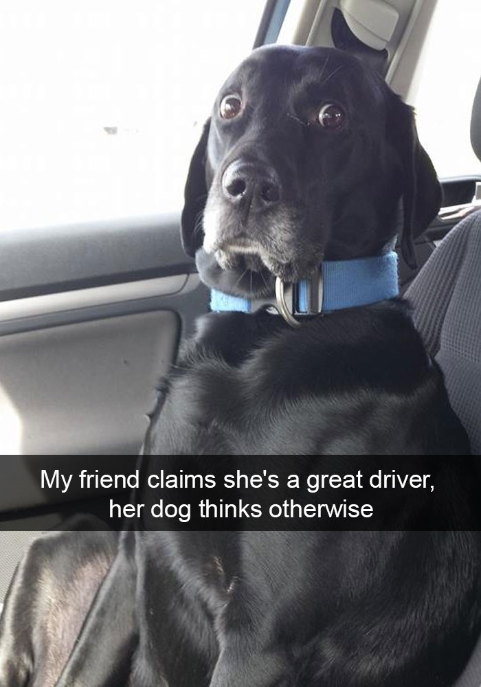 6 - 28 Hilarious Dog Snapchats Will Warm Your Heart