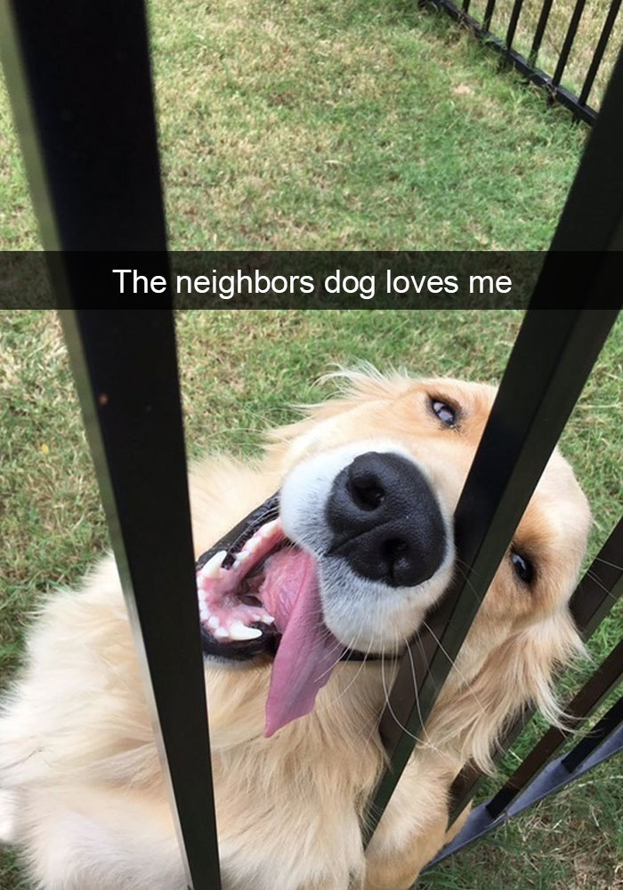 7 - 28 Hilarious Dog Snapchats Will Warm Your Heart