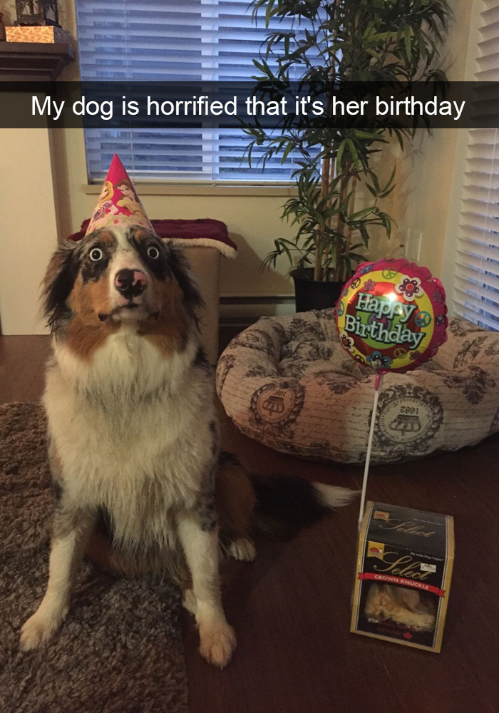 9 - 28 Hilarious Dog Snapchats Will Warm Your Heart