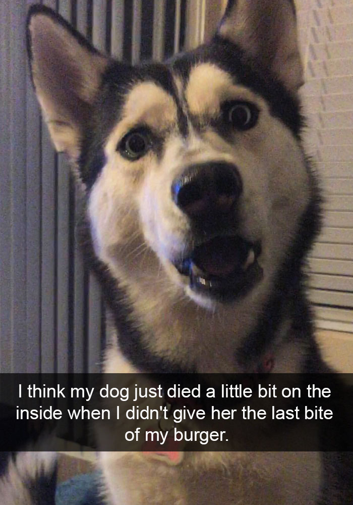 11 - 28 Hilarious Dog Snapchats Will Warm Your Heart
