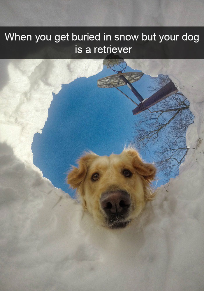 13 - 28 Hilarious Dog Snapchats Will Warm Your Heart