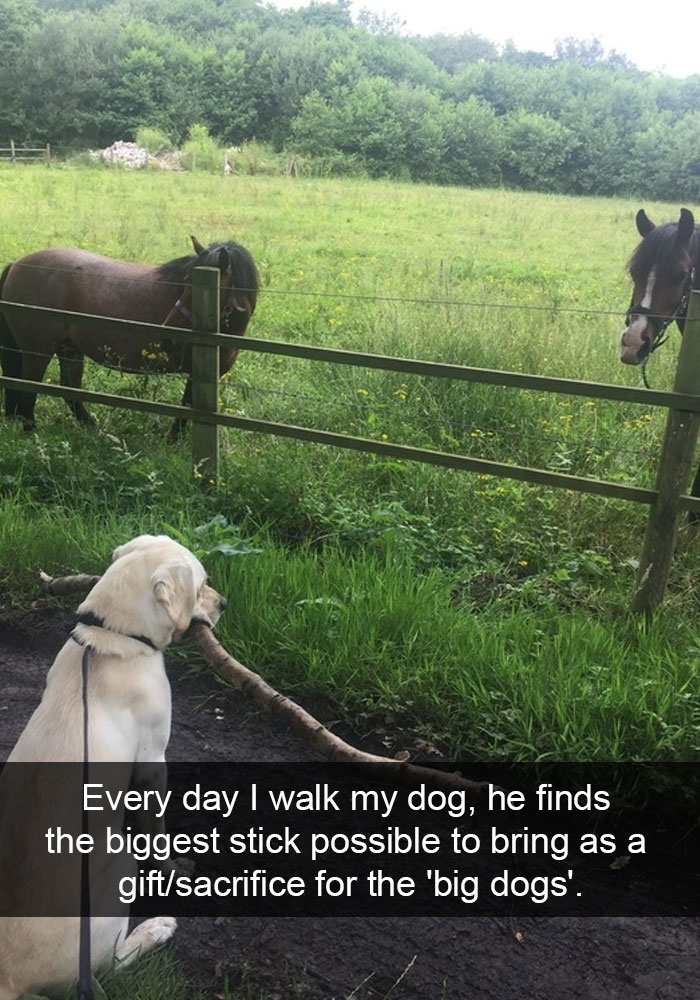 14 - 28 Hilarious Dog Snapchats Will Warm Your Heart