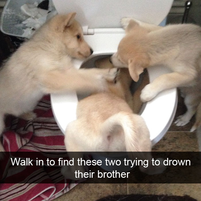 17 - 28 Hilarious Dog Snapchats Will Warm Your Heart