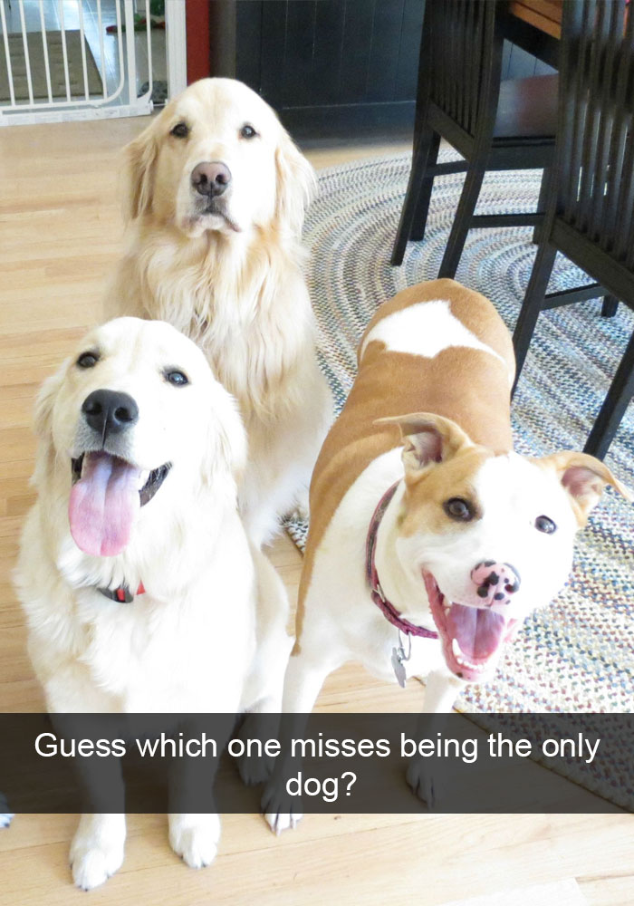19 - 28 Hilarious Dog Snapchats Will Warm Your Heart