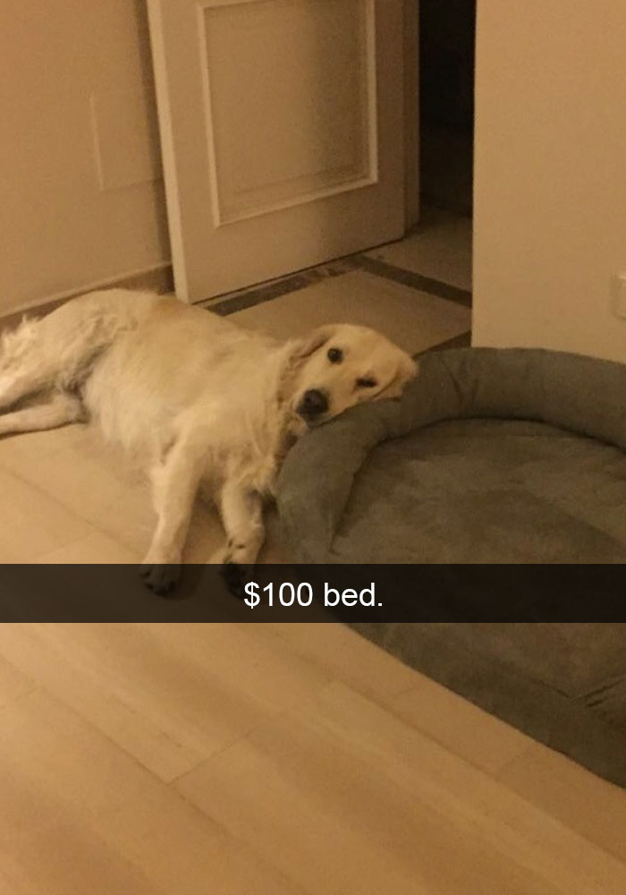 21 - 28 Hilarious Dog Snapchats Will Warm Your Heart