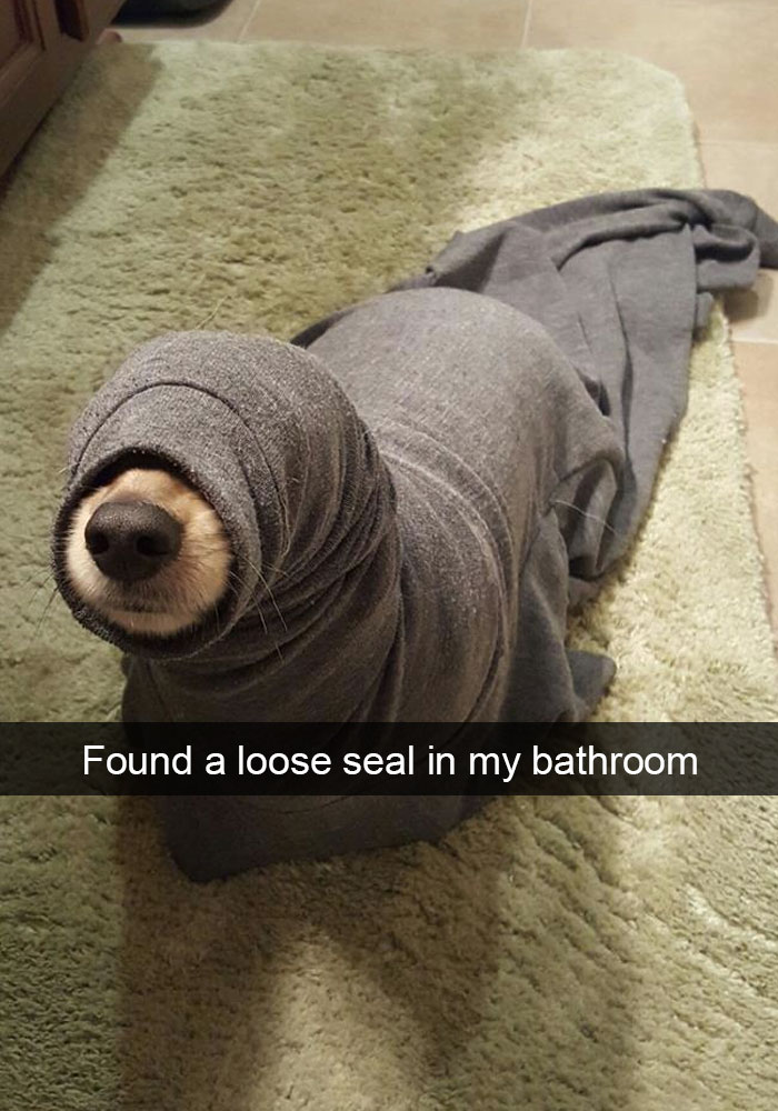 24 - 28 Hilarious Dog Snapchats Will Warm Your Heart