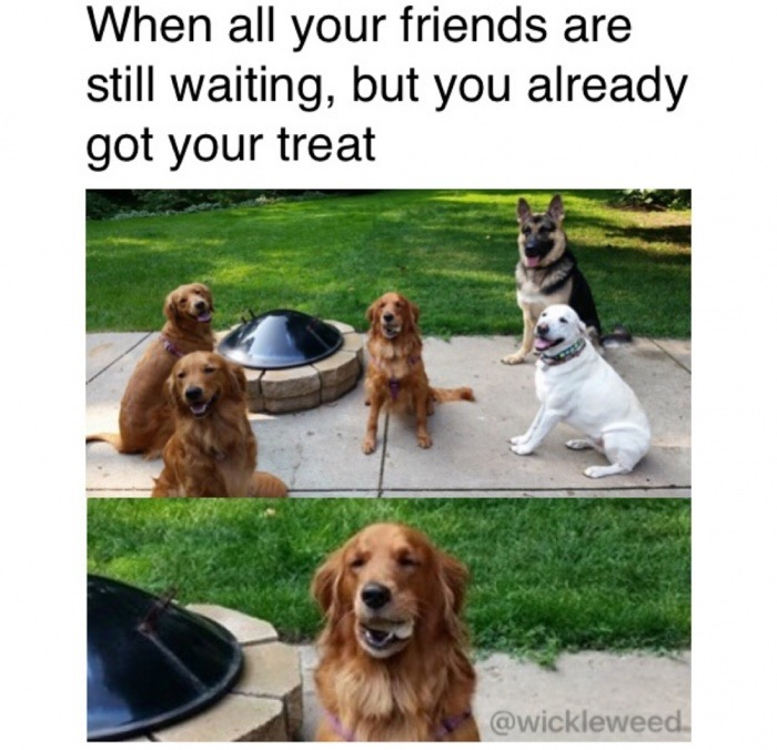 6 - Funny dogs and one has his treat already.