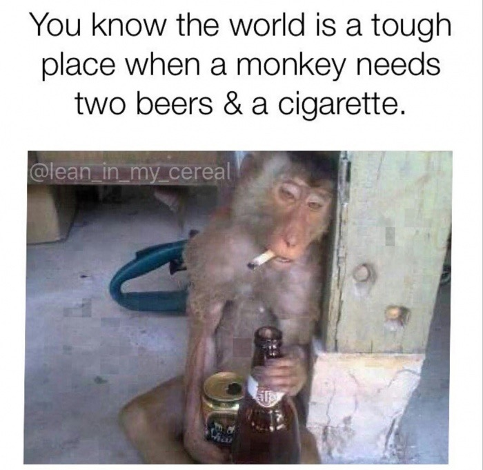 9 - Funny picture of a monkey with a cigarette and two beers.