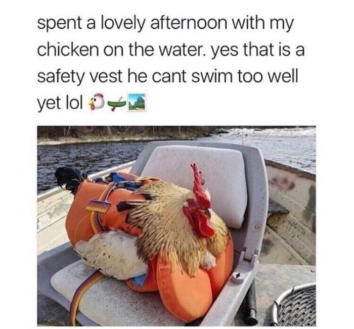 85424474 50 funny af dank memes to ward off the blues funny gallery