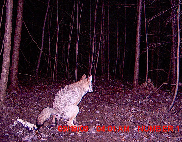 1 - 37 Times Hidden Cameras Revealed What Animals Do When Nobody Is Watching
