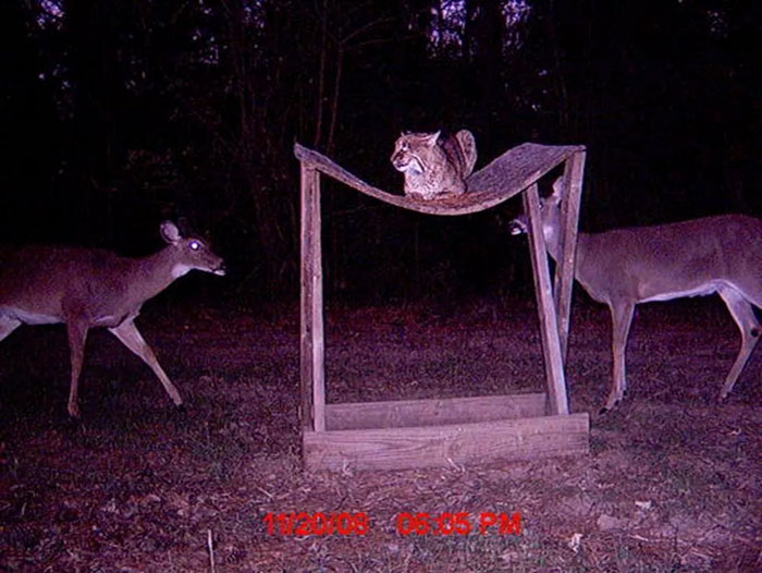 13 - 37 Times Hidden Cameras Revealed What Animals Do When Nobody Is Watching