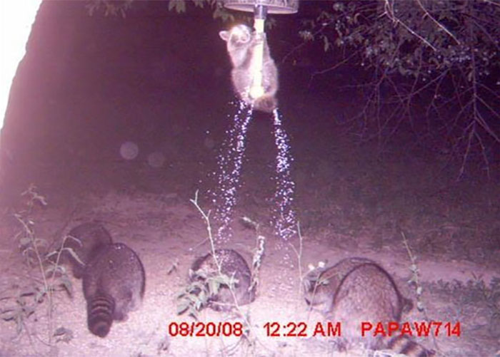 27 - 37 Times Hidden Cameras Revealed What Animals Do When Nobody Is Watching