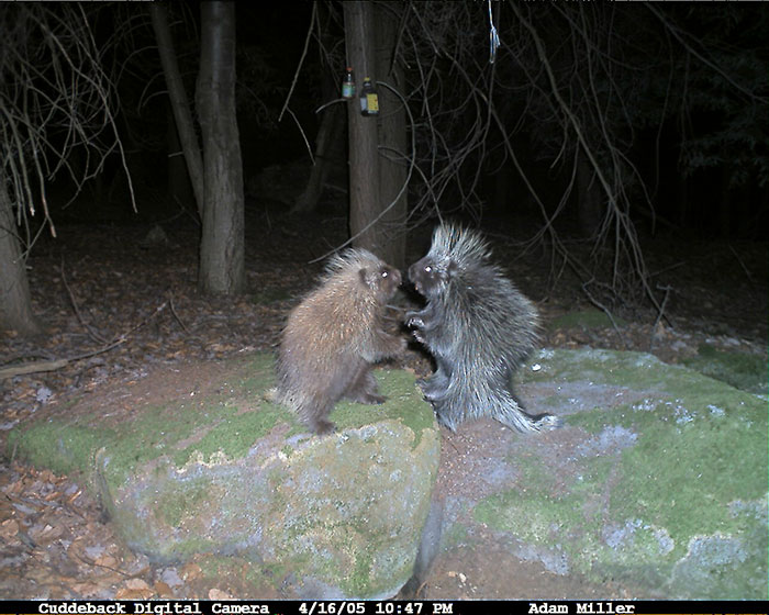 30 - 37 Times Hidden Cameras Revealed What Animals Do When Nobody Is Watching