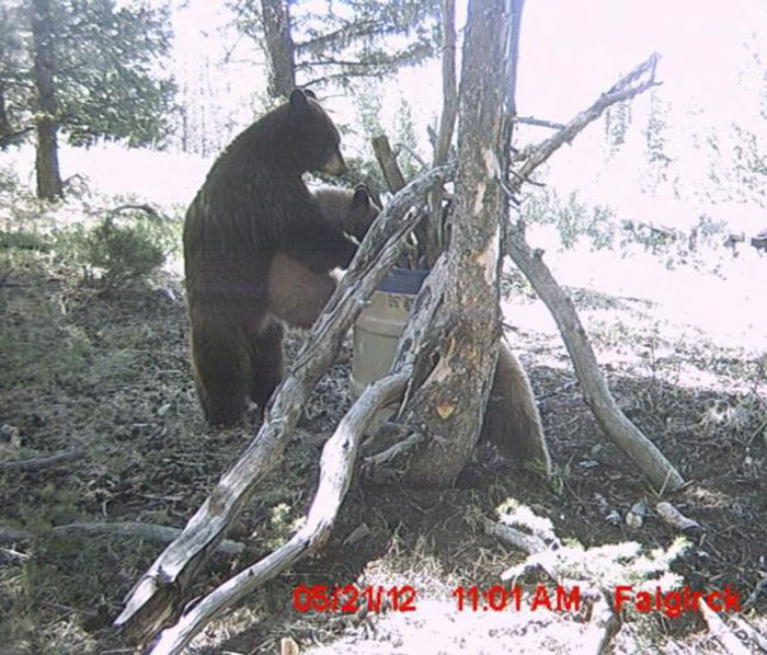 34 - 37 Times Hidden Cameras Revealed What Animals Do When Nobody Is Watching