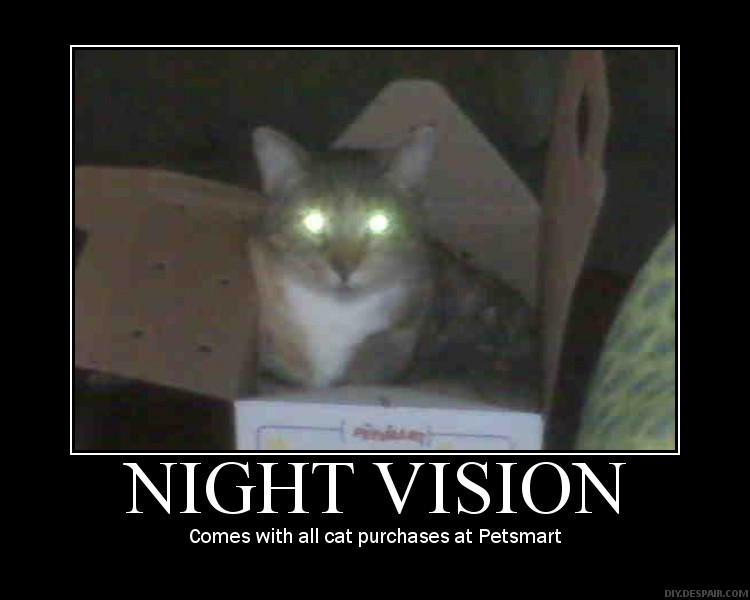 What Does Night Vision Look Like For Cats