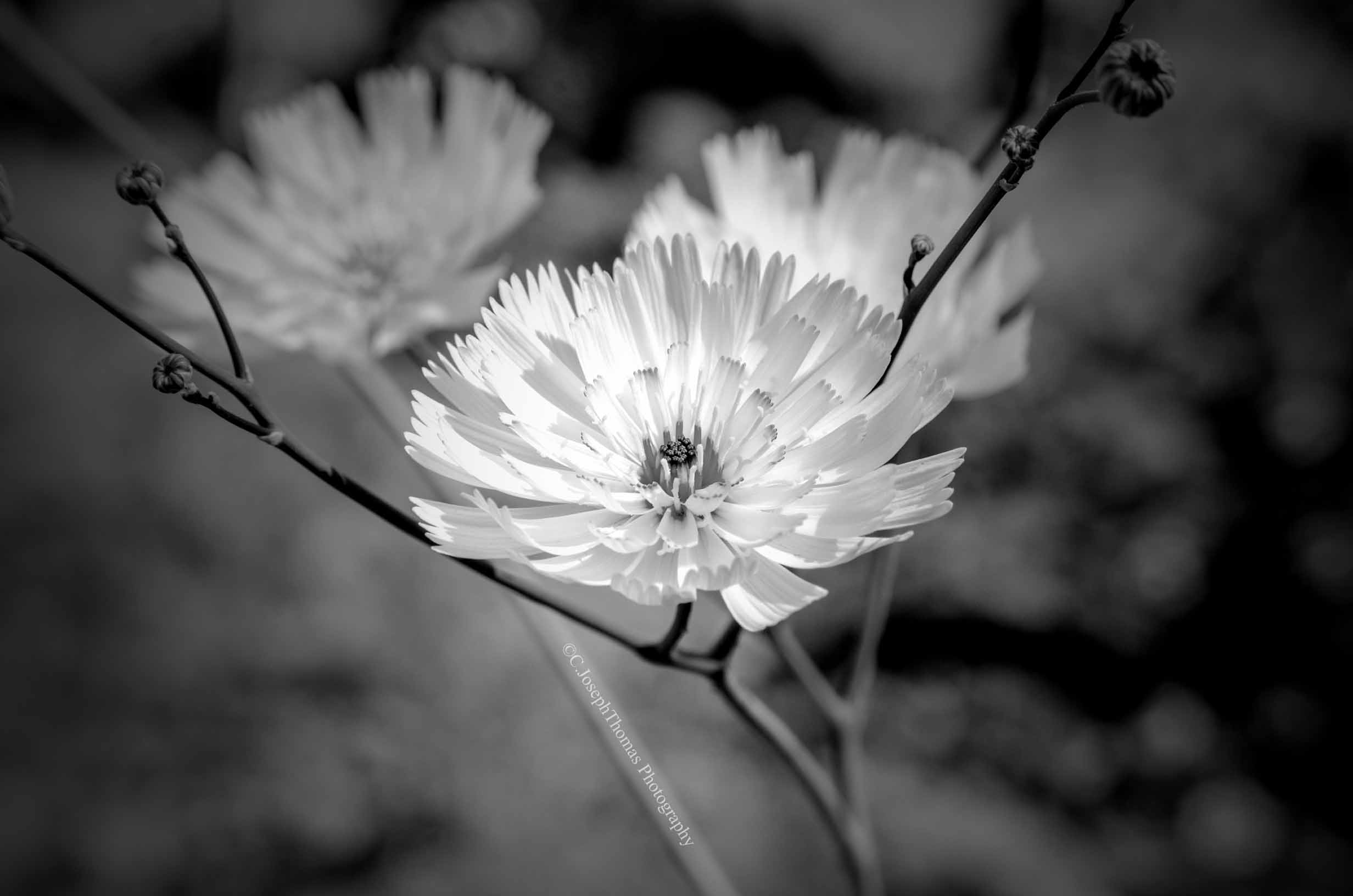 Black and White Photographs From My Travels - Feels ...