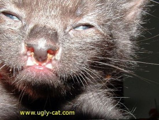 ugly pussy of the world