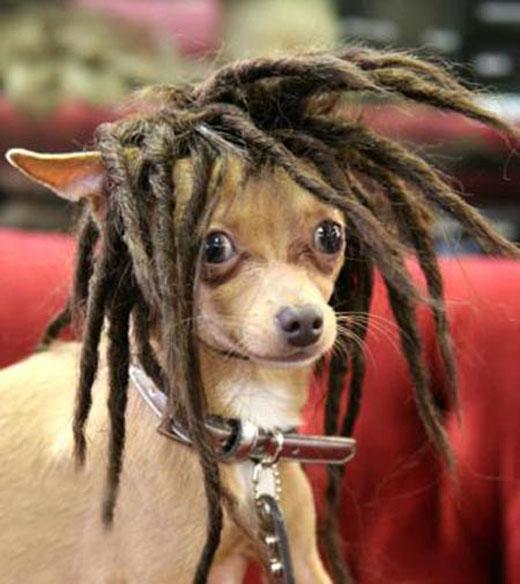 Rasta Dog Picture Ebaum S World