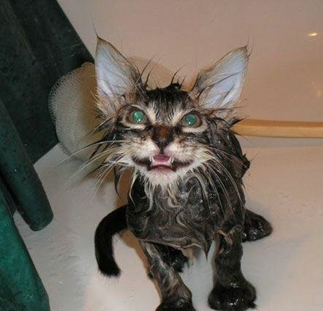 Funny Wet Cats - Gallery | eBaum's World