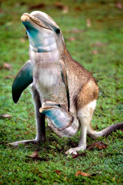 Photoshop Animal Hybrids - Gallery | eBaum's World
