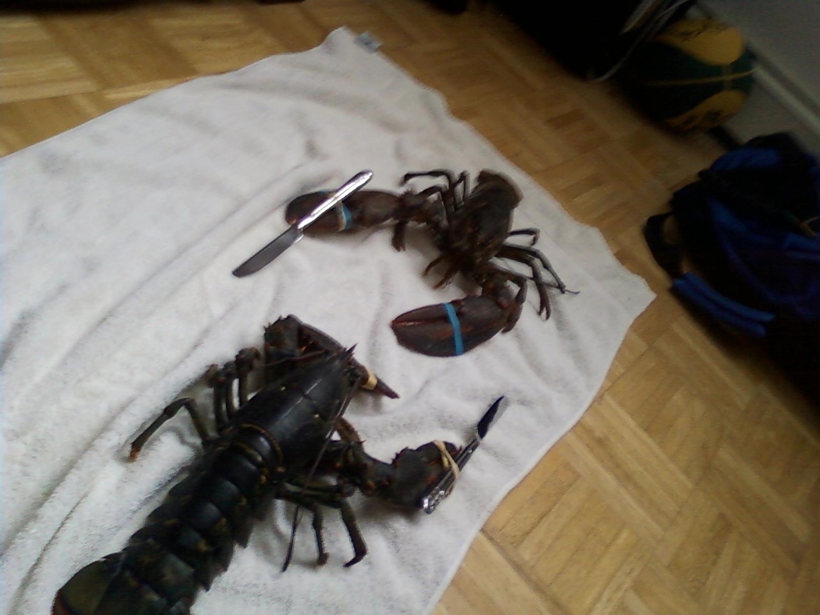 Lobster Knife Fight Gallery Ebaum S World