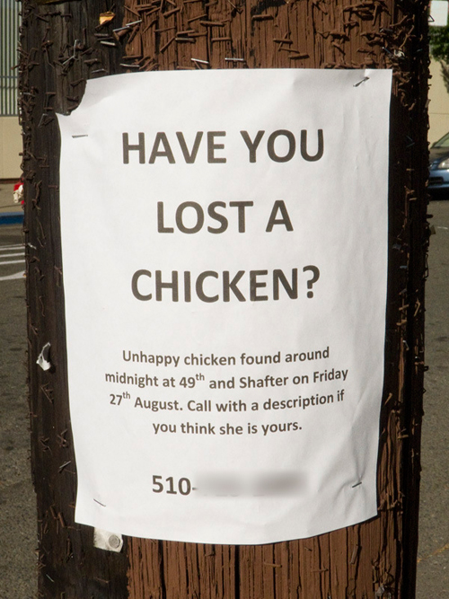 Hilarious Lost Pet Flyers Gallery Gallery EBaums World - 20 hilarious lost pet signs