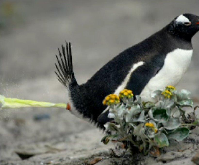 Penguin Poop. - Gallery | eBaum's World