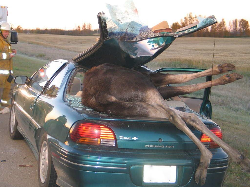 13 horrible car wrecks