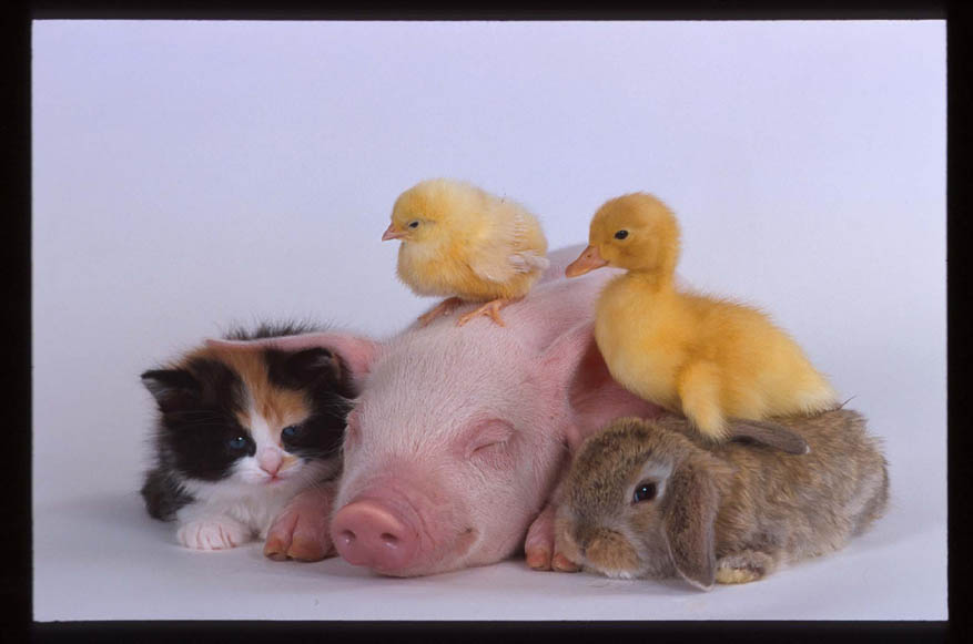 Image result for animal pals