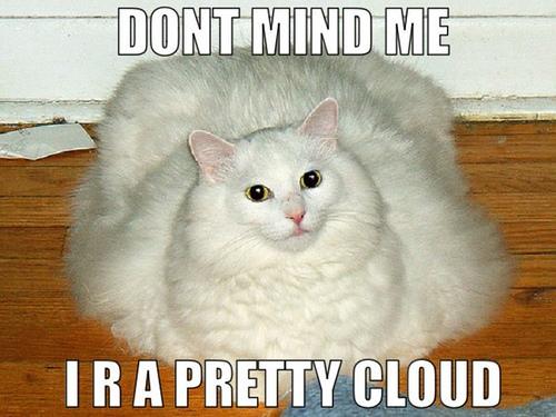 Cute Fat Kitty 104