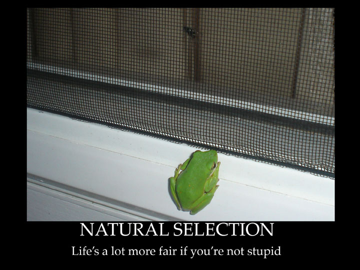 Demotivational Poster - Natural Selection