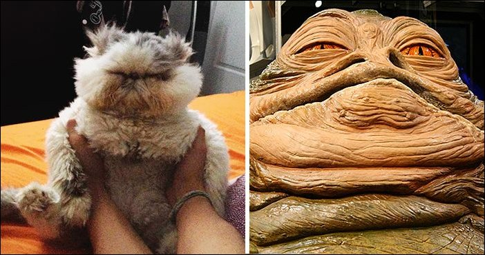 11 Cats Who Look Exactly Like Celebrities - Gallery ... Jabba The Hutt Costume For Dogs