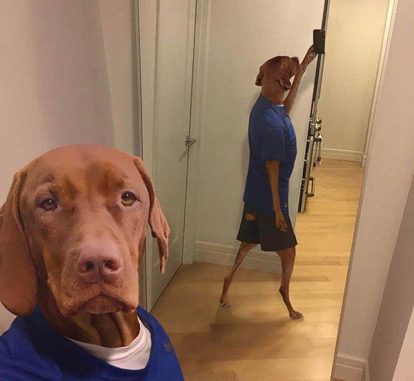 17 - Dog taking a selfie which is made hilarious by his reflection showing it really is him taking the pic.