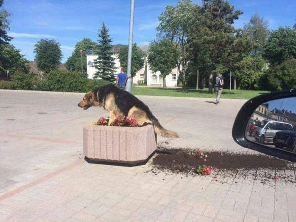 23 - Nonchalant Compilation of 34 Remarkable Images