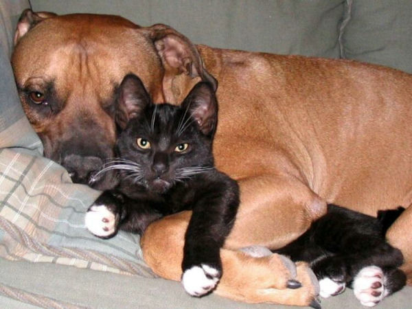 Dogs And Cats Playing Together Dogs And Cats Playing Together