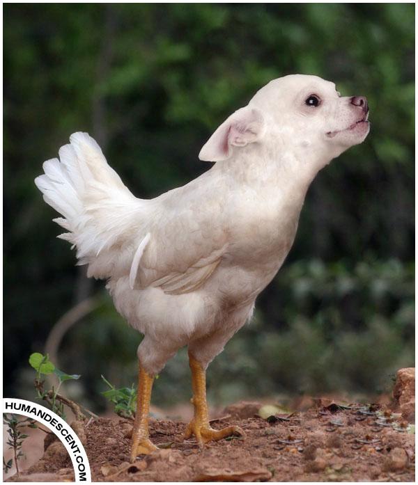 Photoshopped Hybrid Animals Gallery Ebaum S World