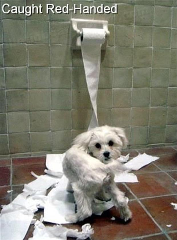 Animals Caught Red Handed Gallery EBaums World - 23 hilarious photos of pets caught red handed