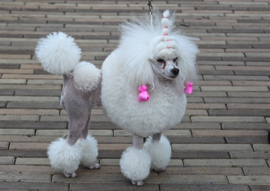 29 Dogs With Bad Haircuts Gallery Ebaums World