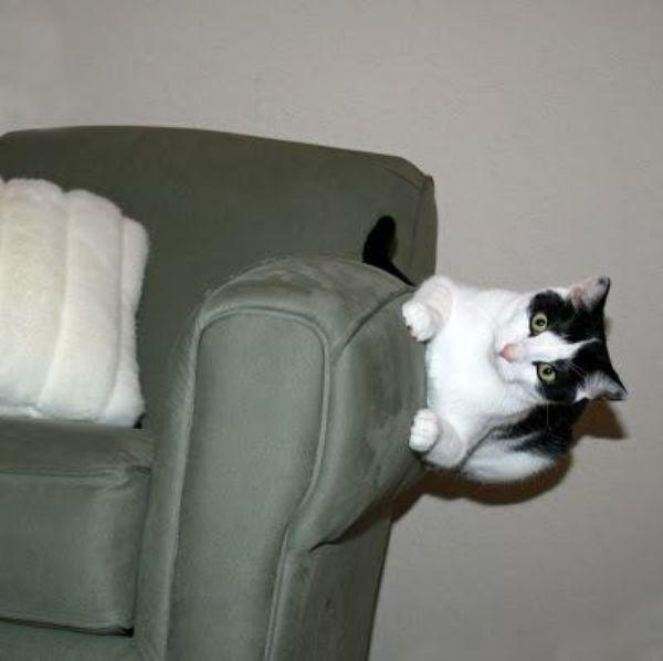 Lidojošie kaķi - Page 5 84563305