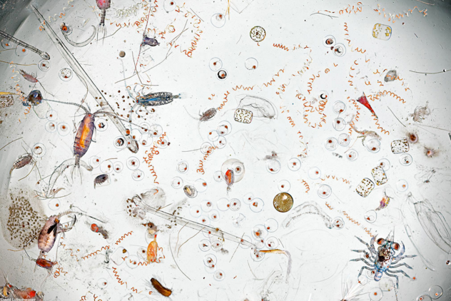 7 - A drop of seawater magnified 25 times