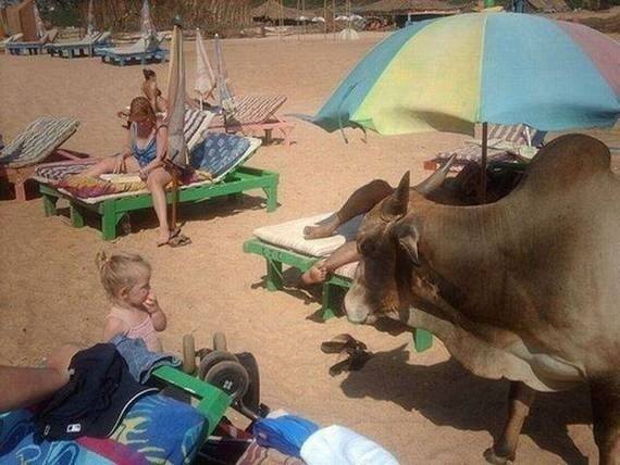 10 - The Most Important WTF Beach Photos Ever Taken