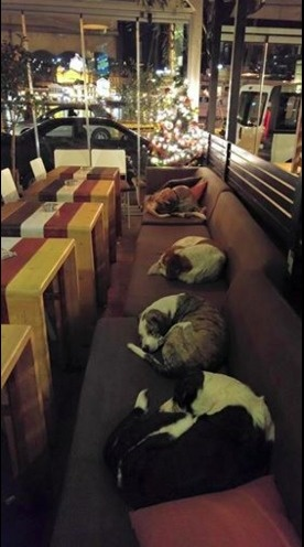 7 - A coffee shop that opens its doors to stray dogs every night to have somewhere to sleep.
