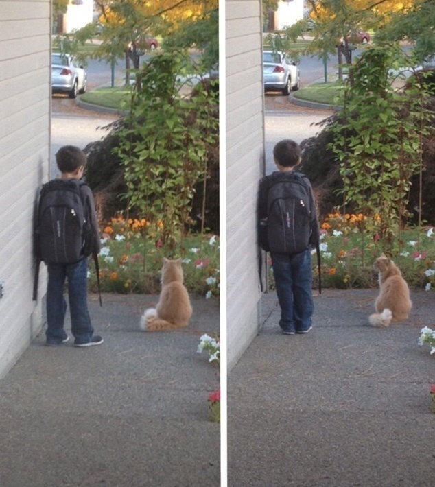 10 - A cat that waits with his human every morning while he waits for the bus to go to school.