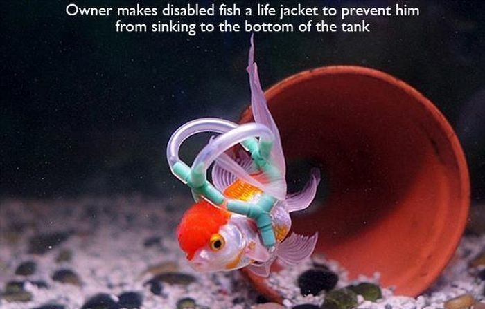 11 - A disabled fish who had a life jacket created for him to help him from sinking.