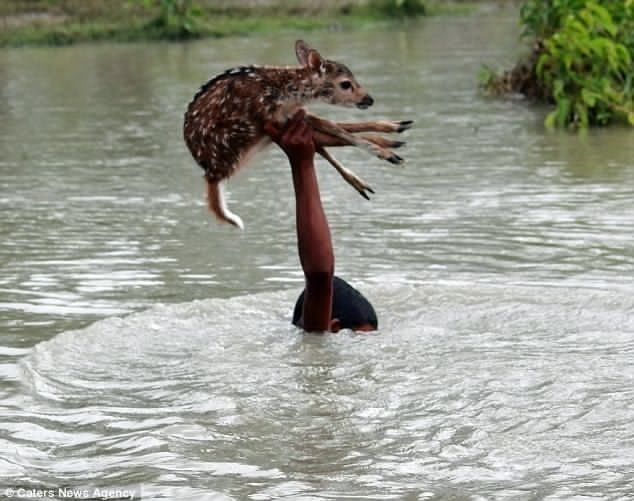 18 - A young boy saving a helpless baby deer from drowning.
