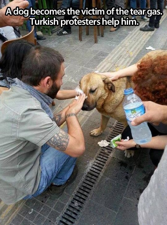 19 - A dog who was injured by tear gas and immediately catered to by Turkish protestors.