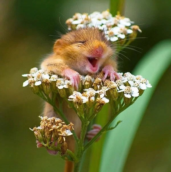 21 - A little hamster having the time of his life while smelling flowers.